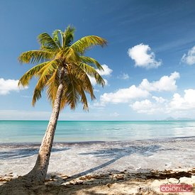 Famous Les Salines beach in Martinique Caribbean