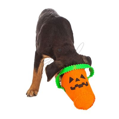Puppy with head in Haloween pumpkin basket