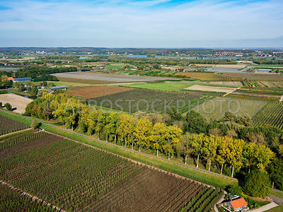 305339 | Lienden, autumn colours in the Betuwe