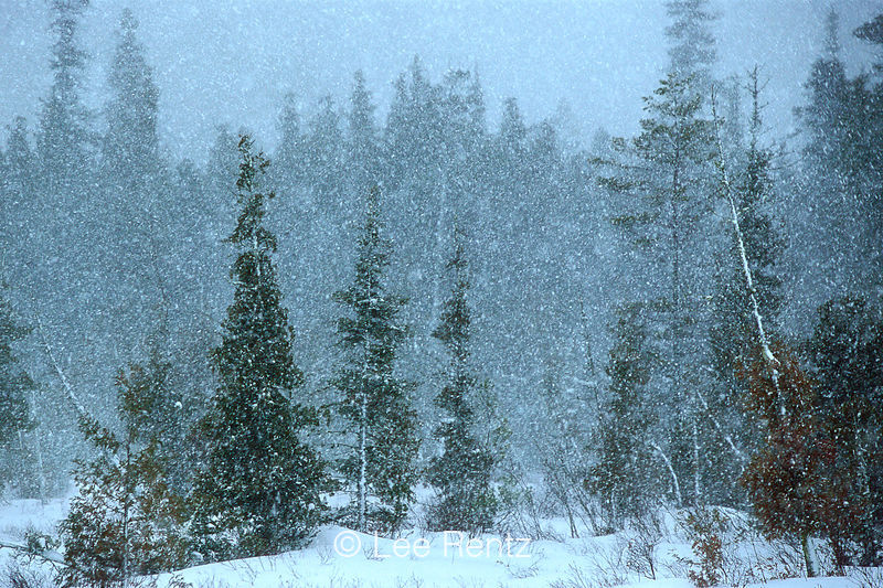 Snow Falling on Cedars : Chapter 9-10