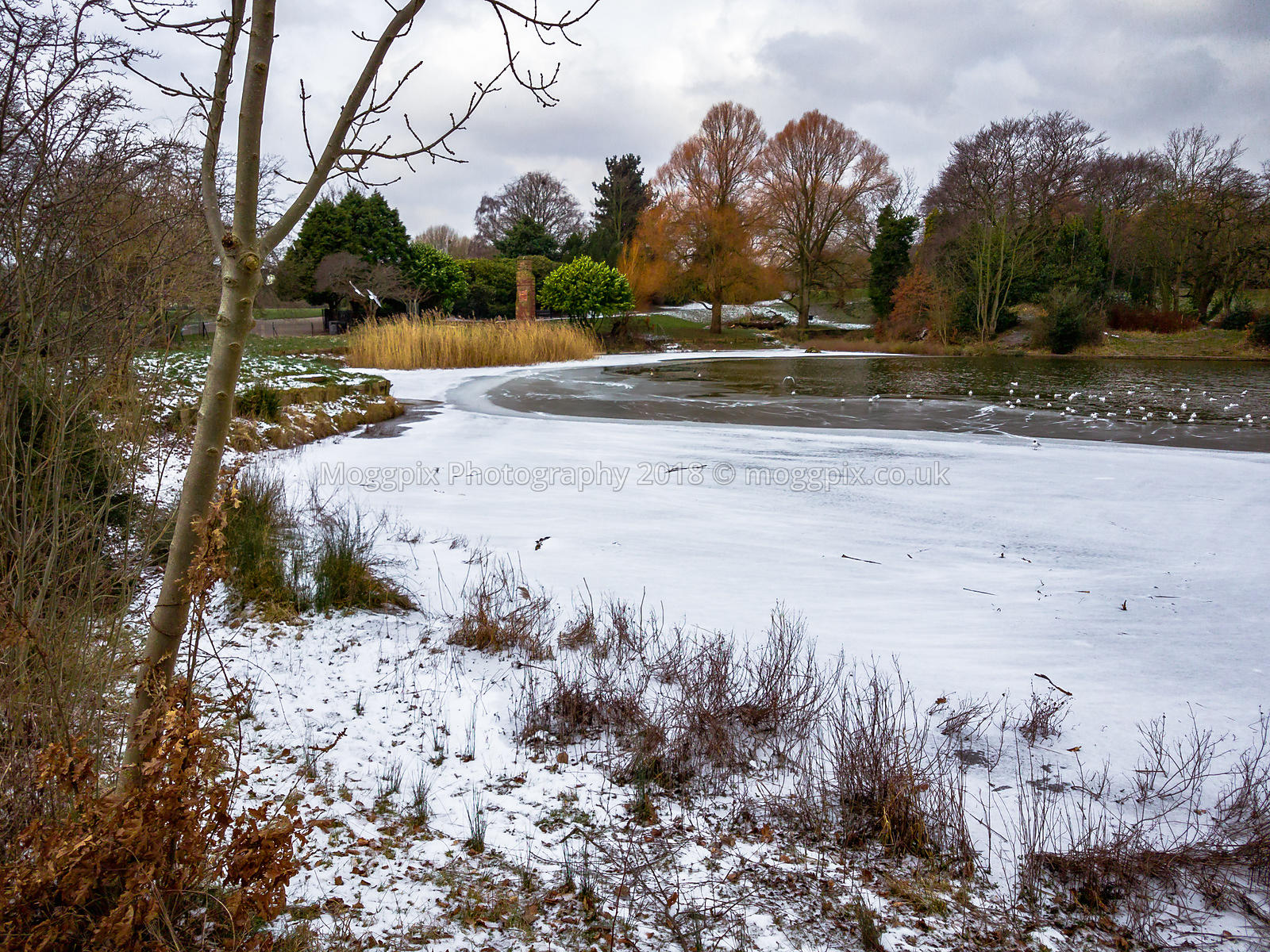 Ice Waters in Princes Park