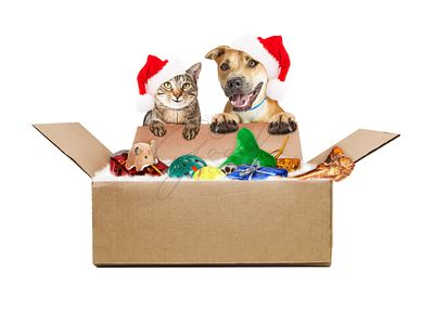 Dog and Cat Receiving Christmas Gift Shipment