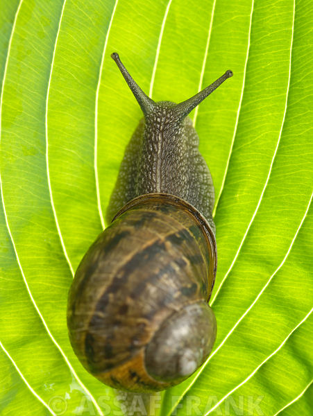 Snail photos