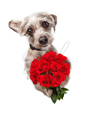 Cute Dog With Dozen Red Roses