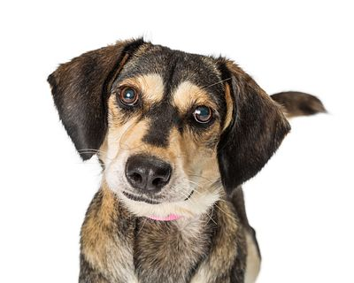 Portrait Cute Medium Size Crossbreed Dog