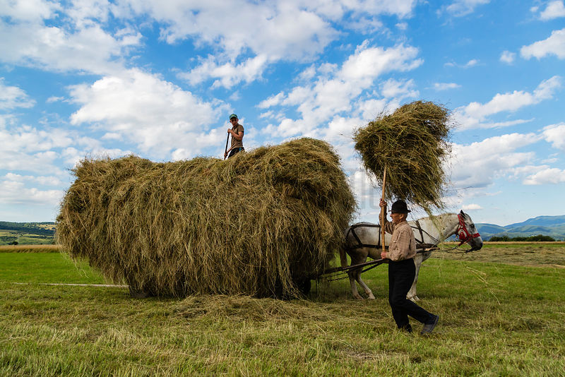 Farm Workers Loading Fresh-cut Hay onto a Horse-drawn Cart