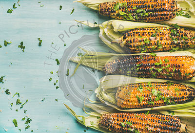 Grilled sweet corn with cilantro over blue background, copy space