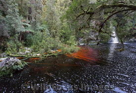Sir John Falls, Franklin - Gordon Wild Rivers National Park, Tasmania, Australia; Landscape