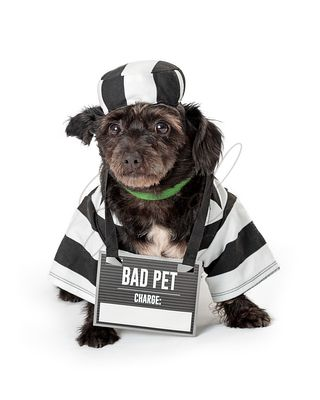 Funny Dog Wearing Prisoner Costume