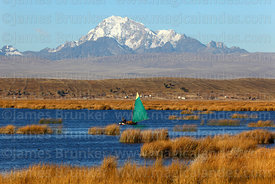 Sailing boat collecting totora reeds (Schoenoplectus californicus ssp. tatora), Mt Huayna Potosí in background, Inner Lake, Lake Titicaca, Bolivia