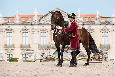Dressage et Haute Ecole photos
