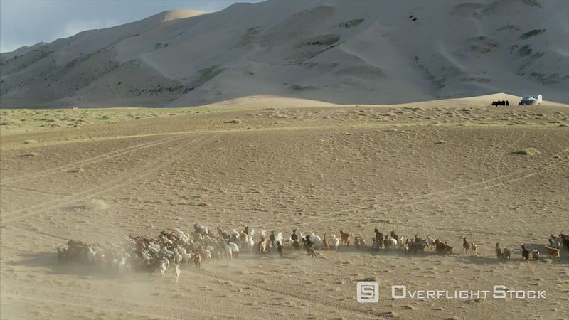 Livestock Grazing on the Singing Sand Dunes of the Gobi Desert of Mongolia