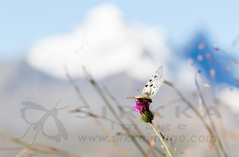 Butterflies / Perhosia photos
