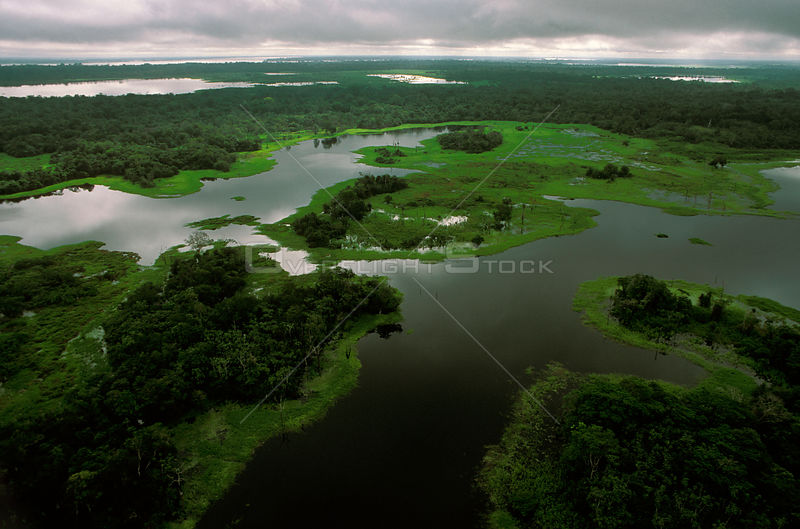 Flooded tributary of the Amazon river during the rainy season, Amazon, Brazil, 1994.