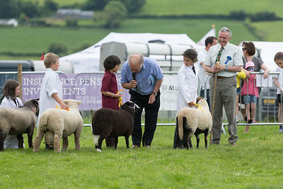 Judging sheep classes, Aberystwyth Show
