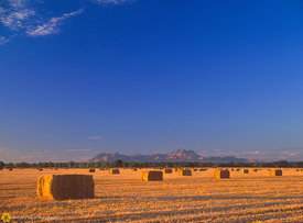 Baled Hay & Sutter Buttes