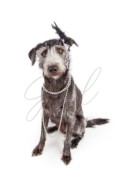 Dog Dressed as Flapper Girl