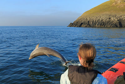 Dolphin watching boat trip, Mwnt