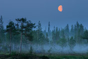 Moonrise over forest and bog