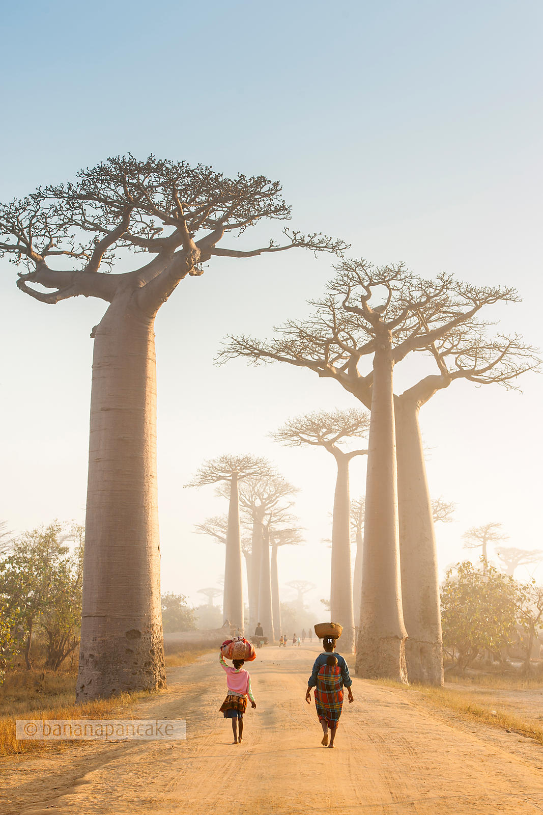 Women at dawn, Avenue of the Baobabs, Madagascar