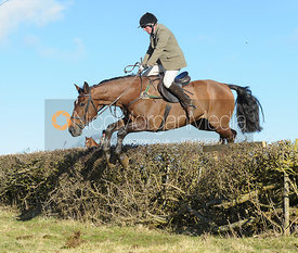 Dick Wise jumping a hedge near Knossington Spinney - The Cottesmore at Furze Hill.