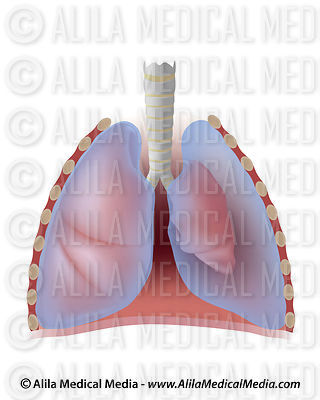 Pulmonology Images & Videos images