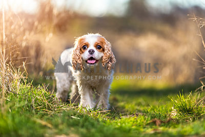 Dogs by Breed photos