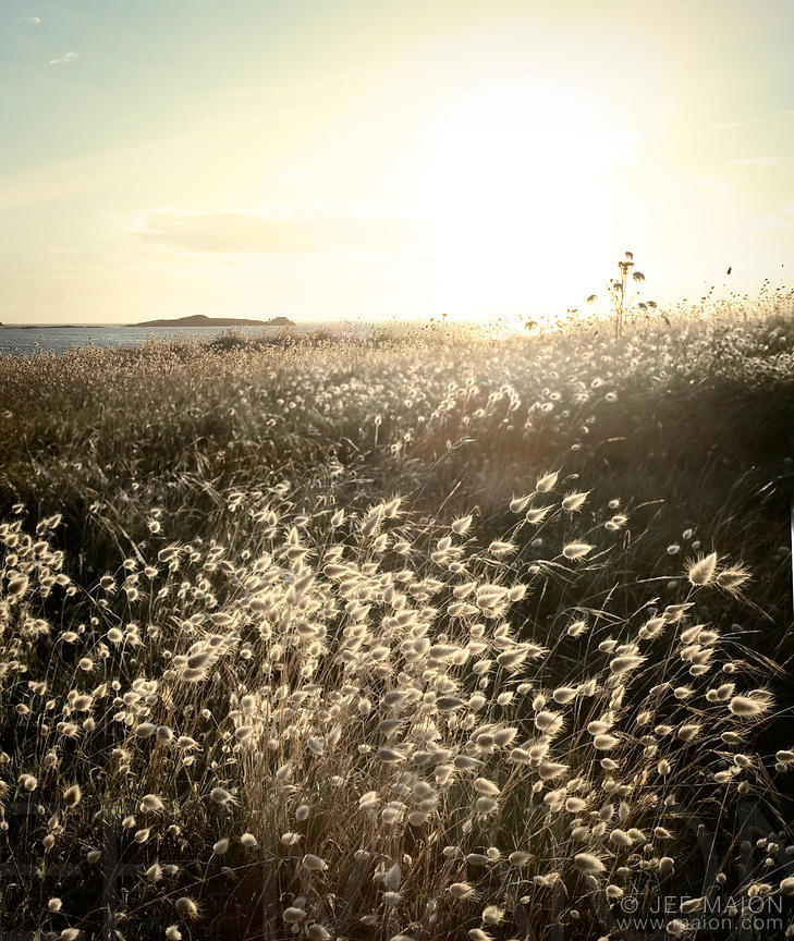 Sunset on wild grass