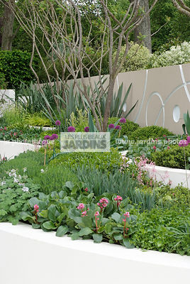 Jardin contemporain, Jardin design. Massif surélevé : Allium hollandicum 'Purple Sensation'. Designer : Robert Myers. Chelsea FS, Angleterre