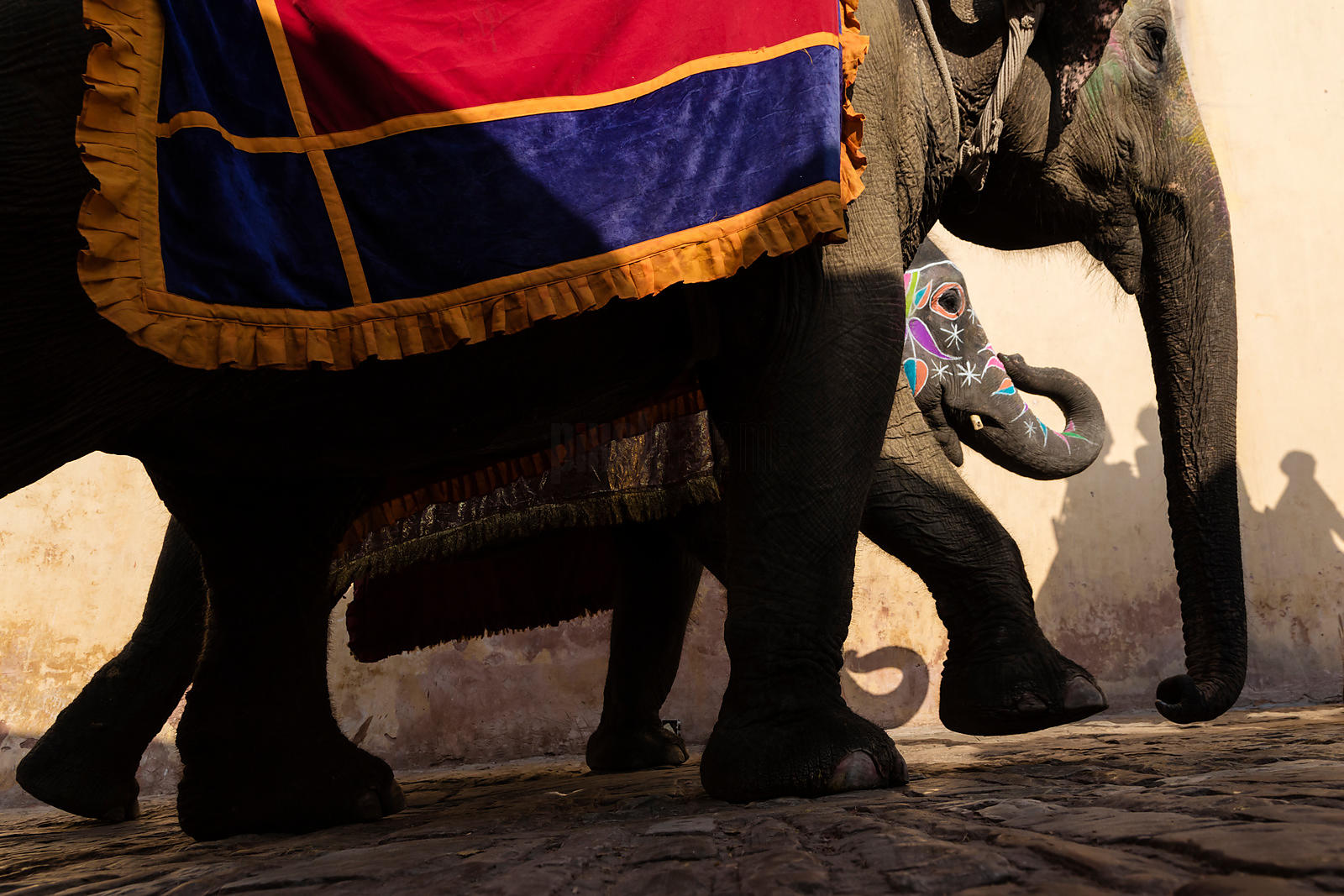 Elephants Carrying Tourists to the Amber Fort