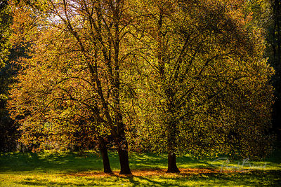 PBE-2012-10-28_-_Parc_de_Saint-Cloud-4521