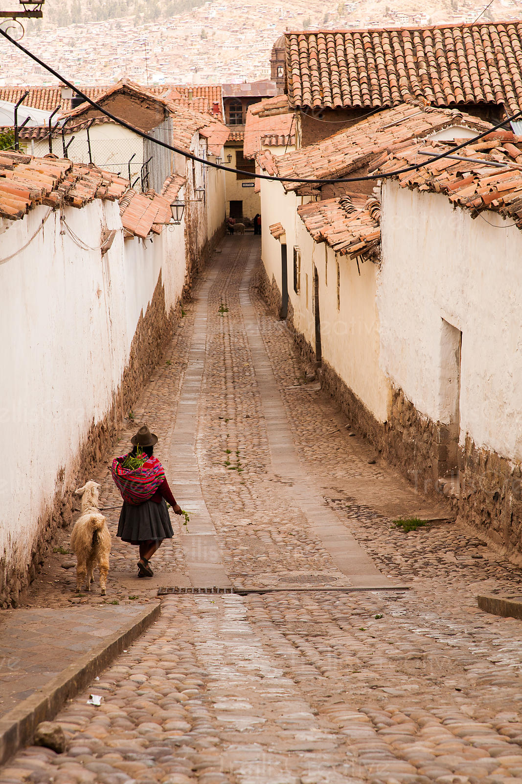 Kechwa woman leading her alpaca down an alley, Cuzco, Peru