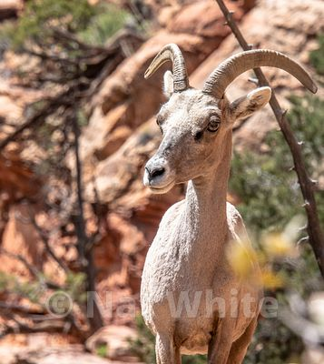 Zion_National_Park--Zion_NP_-157April_18_2018-April_18_2018-