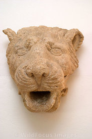 Roman sculptured animal head; Carthage Museum, Tunis, Tunisia; Portrait