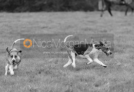 Belvoir hounds - Belvoir Hunt Opening Meet 2016