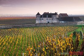 Vougeot castle and vineyards at sunset, Burgundy, France