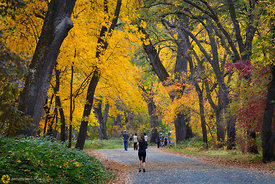 Fall Colors in Bidwell Park, Chico #8