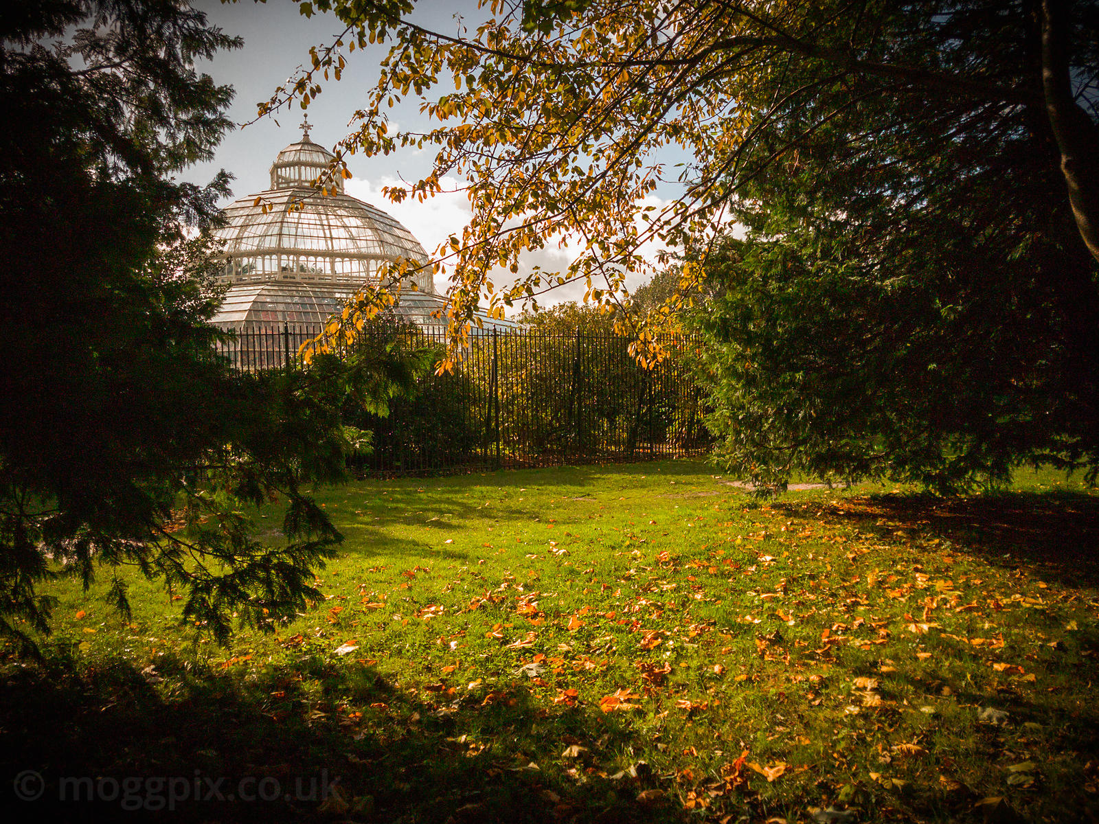 Palm House, Framed by Nature