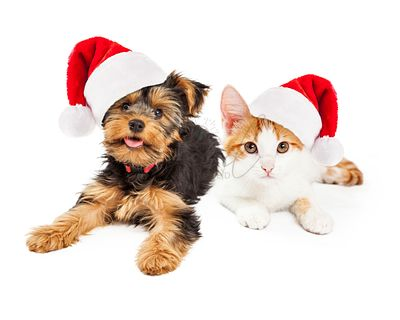 Christmas_Kitten_and_Puppy