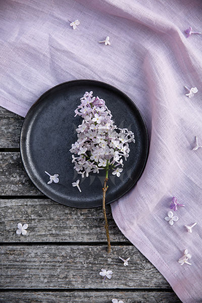 lilac by gabler Photos