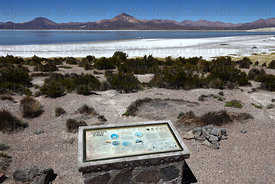 Information board describing the 3 types of flamingo found at Salar de Surire , Region XV , Chile