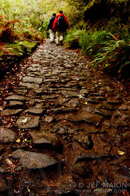 Stone-paved trail in the forest and hikers