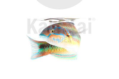 fish rencontres