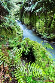 Canyon with river, Whirinaki forest, New Zealand
