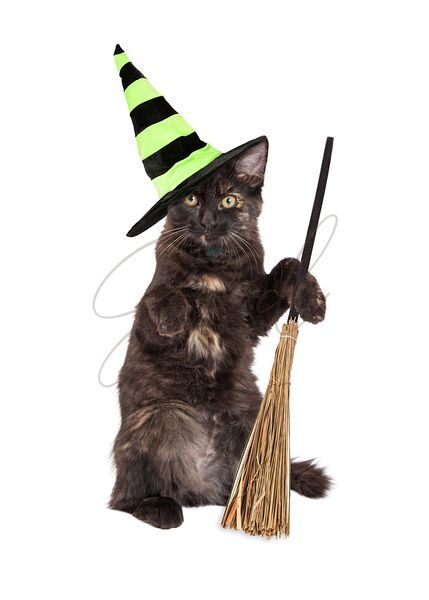 Halloween Witch Cat With Broom
