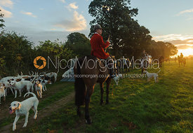 Robert Medcalf with the Cottesmore Hounds