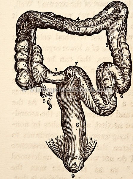 Intestine and Rectum