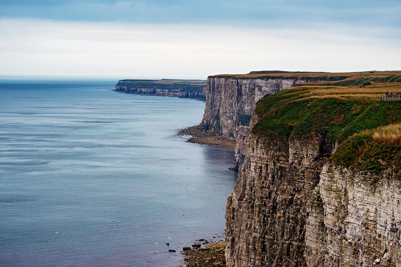 Landscape | Canvas wall art | Yorkshire | Bempton Cliffs