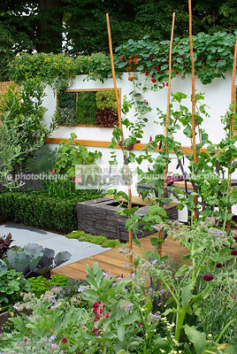 Allotment, garden designer, mangetout, Mini potager, Mini Vegetable garden, Small garden, Urban garden, Vegetable patch, Vegetable plot, Foliage wall, Green wall, Vegetation wall, Wall decoration