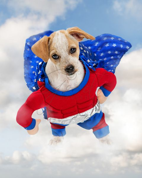 Superhero Dog Standing on Cloud